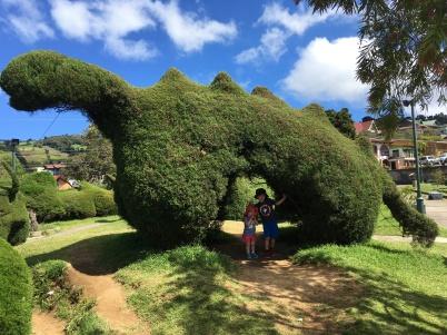 dinosaur shrub