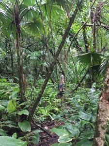man hiking in tropical rainforest