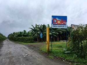 banana plantation Dole
