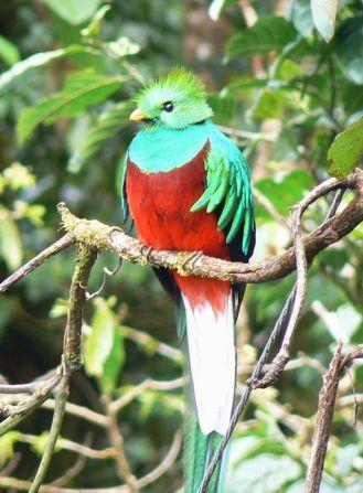 512px-Quetzal01